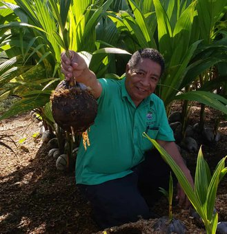Caribbean Farmers Prepare for Coconut Boom,