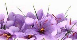 rose_of_saffron