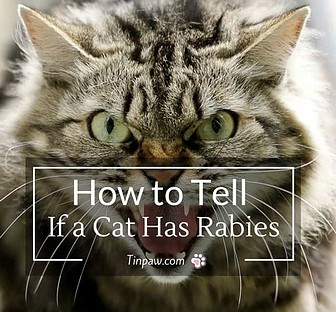 How to Tell If a Cat Has Rabies