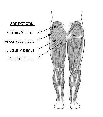 Glutes Anatomy