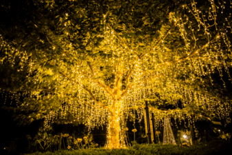 How To Put Christmas Lights On A Large Outdoor Tree