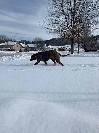 snow in spokane