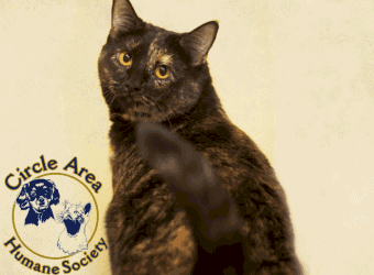 Circle Area Humane Society