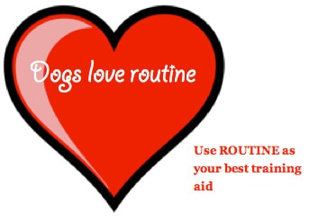 dogs love routine