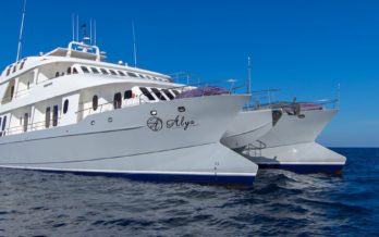 M/C Alya Catamaran