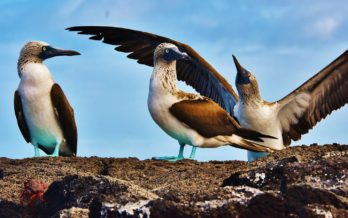 galapagos sea birds