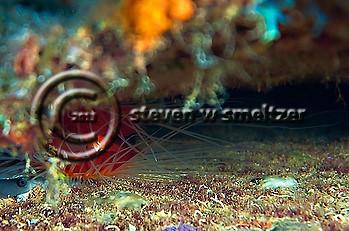 Oro Verde, Grand Cayman (Steven W Smeltzer)