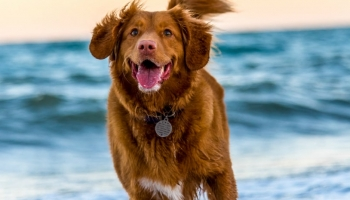 Best Dog Food for Yeast Infections: Detailed Guide