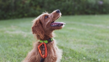10 Cool Tricks to Teach Your Dog: Detailed Training Guidelines