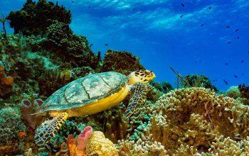 Insel Cozumel, Mexiko - Sehenswürdigkeiten und Aktivitäten