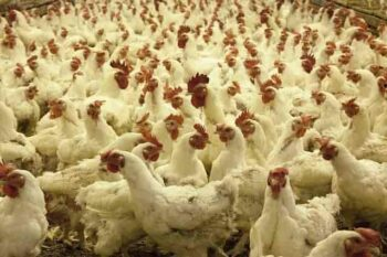 poultry farming business in hindi