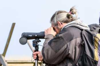 A Birdwatcher using a Spotting Scope