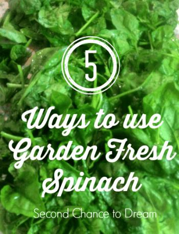 Second Chance to Dream: 5 Ways to Use Garden Fresh Spinach #gardenfresh #spinach