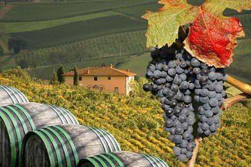 wine tasting tours Tuscany