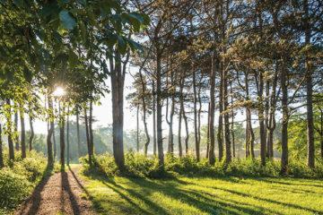 درختان و سایه هایشان