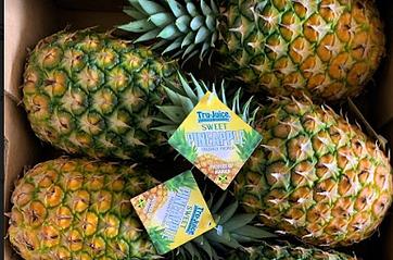 Tru-Juice Introduces Pineapple to the Mix