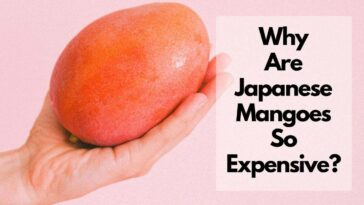 why are mangoes so expensive in Japan