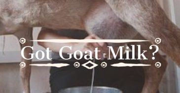 Raw goat milk herd share seven gables va