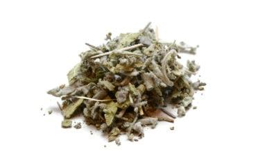 sage-leaf