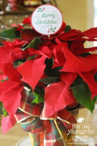 Poinsettia Hostess Gift Idea