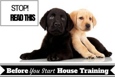 House training basics - Two lab puppys on white background