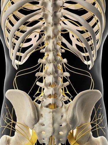 """Der Begriff """"neurologisch"""" umfasst das Nervensystem (Gehirn, Rückenmark und die körperdurchziehenden Nerven) sowie die Muskulatur. Auffälligkeiten können Lähmungen, ein Kribbeln oder Taubheitsgefühle sein."""