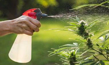 Oregon Residents Resent Cannabis Cultivation Water Usage—But Is It Justified?