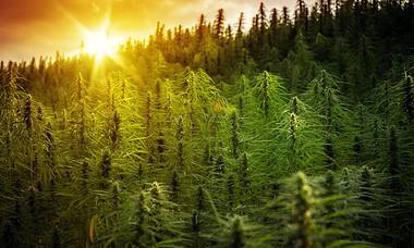 Survey Finds Majority of Montana Residents Want Legal Marijuana