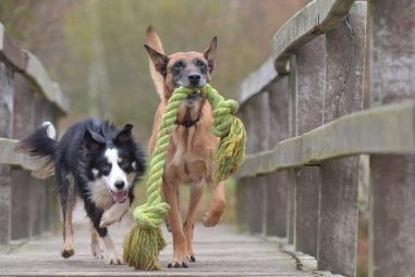 Best Indestructible Dog Toys Reviewed by Certified Trainer