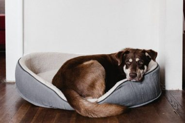 11 Best Indestructible Dog Beds Experts & Pup Parents Think Highly of