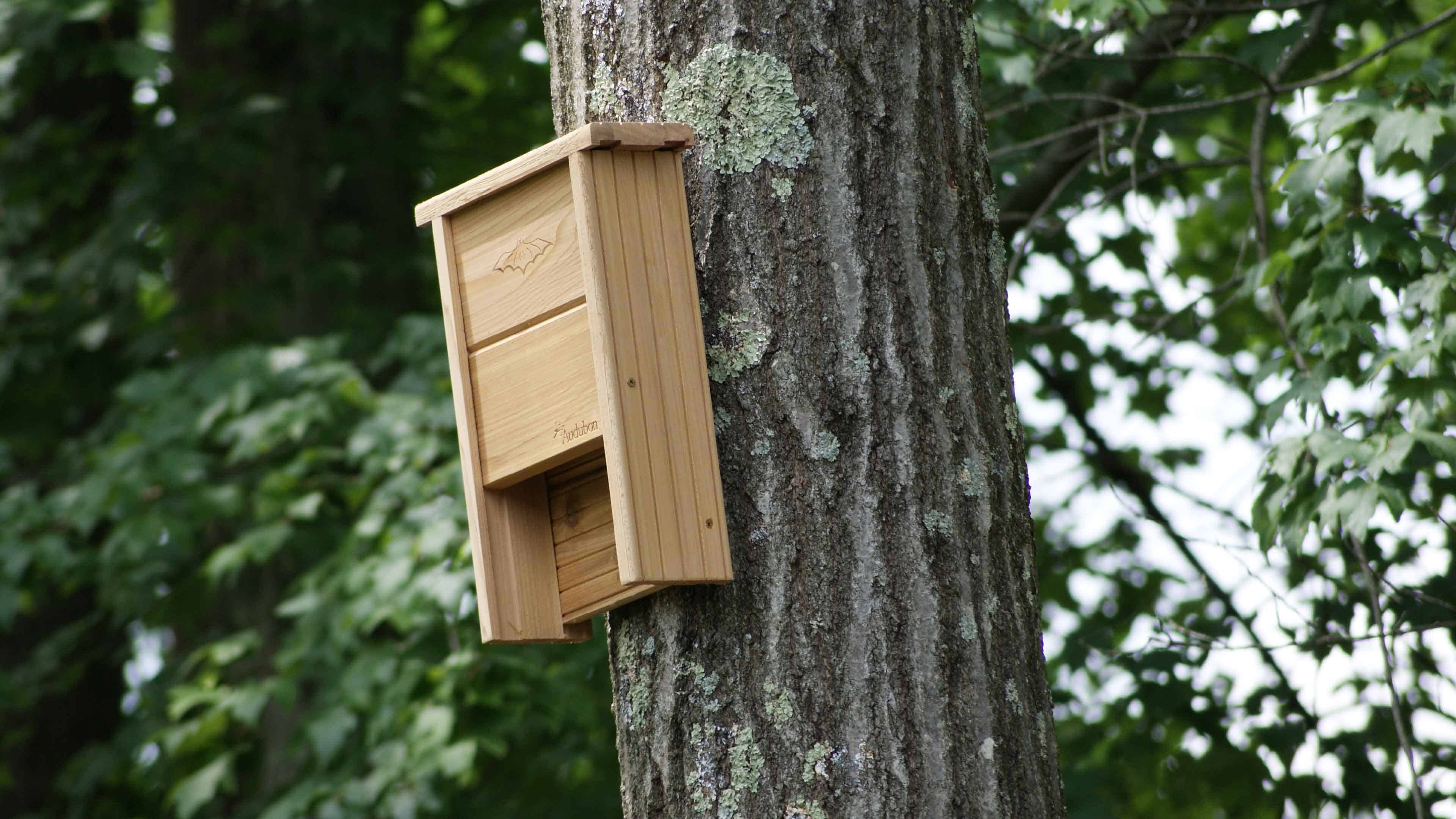 Attracting bats to your yard has many benefits.