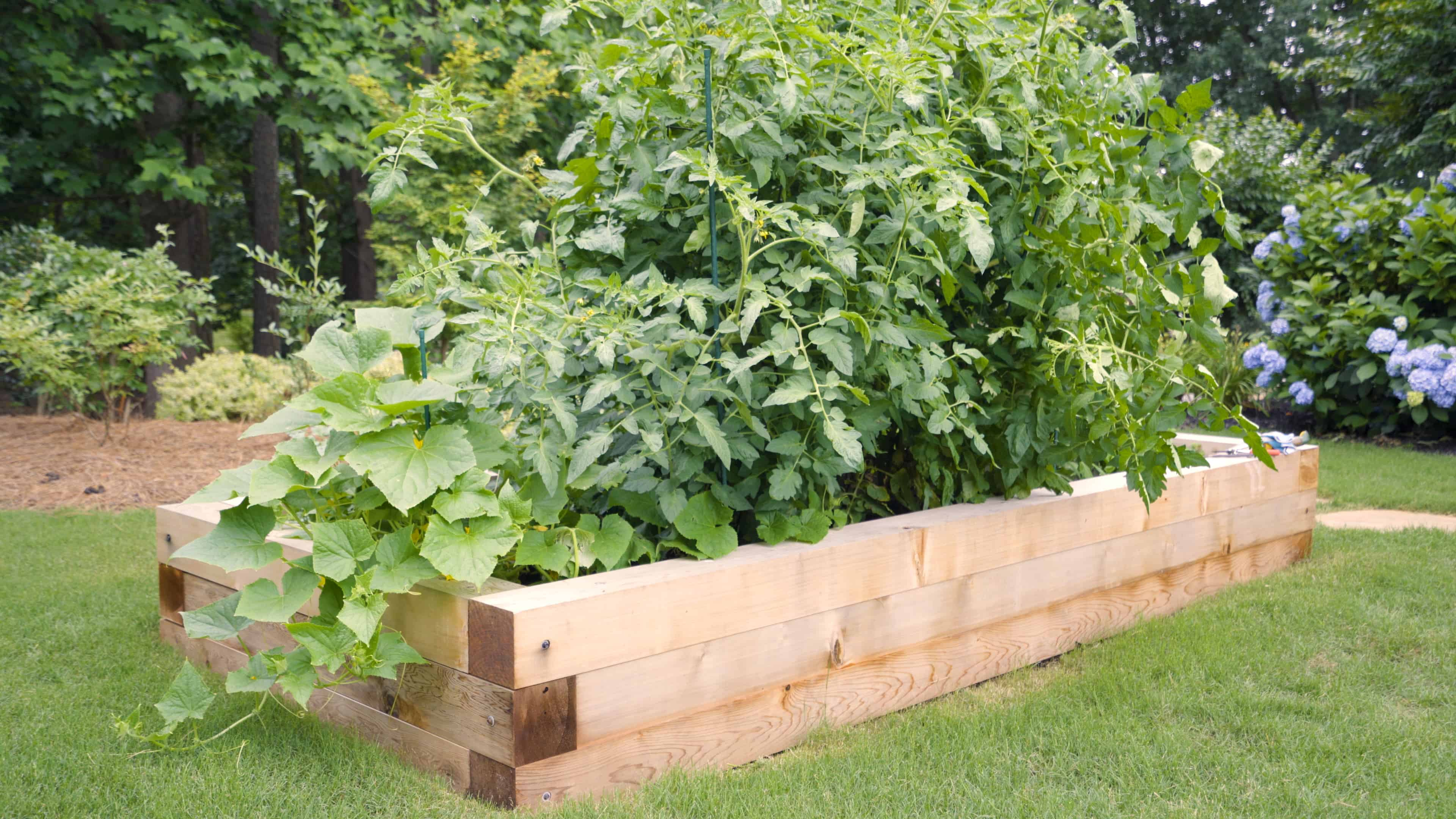 Raised beds are a great way to grow vegetables