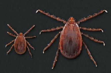 Lyme Disease May Be the Least of Our Concerns as Tick Season Approaches