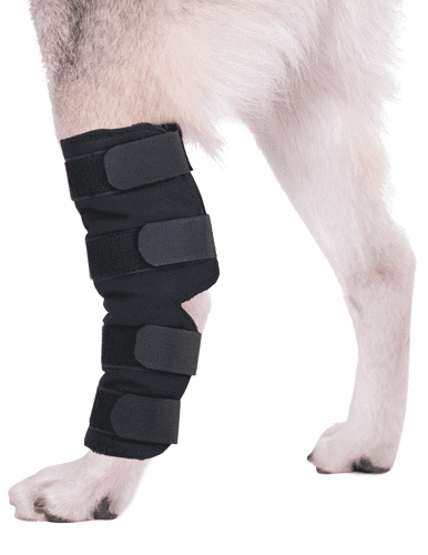 dog hock leg brace