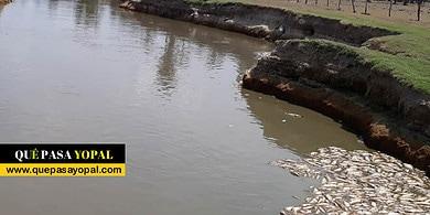 Photo of Autoridades realizaron visita técnica a caño la fortaleza ante denuncia por mortandad de peces