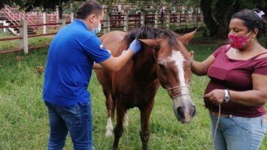 Photo of Avanza jornada de vacunación Encefalitis Equina Venezolana para equinos
