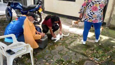 Photo of 32.130 animales se vacunaron en Yopal contra la rabia