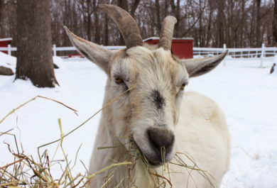 Sponsor an animal makes a great holiday gift