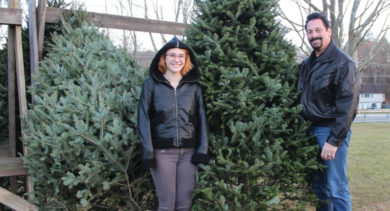 Christmas tree sales at Boni-Bel