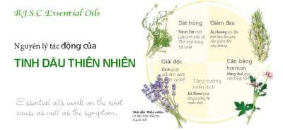 Nguyen-ly-tac-dong-cua-tinh-dau