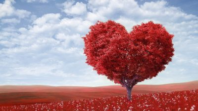 Image: A red tree shaped like a heart in a field of red flowers
