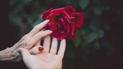 Image: An older and and a younger hand reach out to touch a red rose