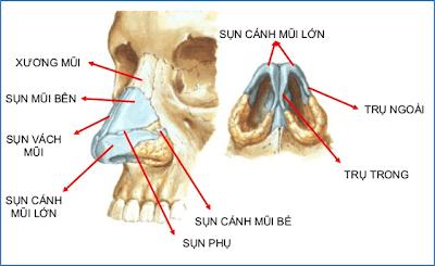 cấu tạo mũi