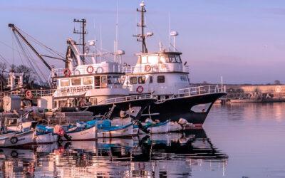 Decreto 332/020 – Ministerio de Ganadería, Agricultura y Pesca – Ministerio de Economía y Finanzas – Pesca