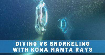 Manta Ray Dives of Hawaii: Night Diving vs. Snorkeling