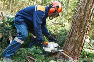 tree removal Oklahoma City - OKC Tree Removal Specialists