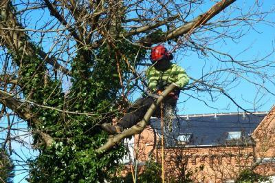 Tree Trimming Company OKC