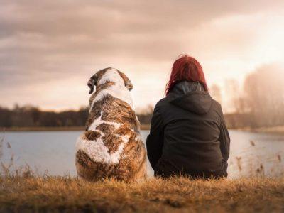 Sveučilište 2019-11-01 u Kanadi ispituje kako kanabis može pomoći u borbi protiv raka kod pasa