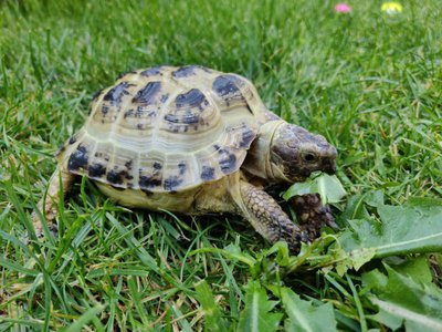 Tortoise spirit animal