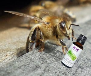Using essential oils for honey bees - a natural alternative. Beekeeping with essential oils and other natural methods reduces the use of chemicals.